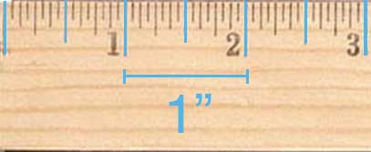 Inch markings on a ruler are the longest ticks. There are usually 12 inches  on