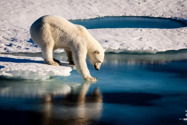 Sea ice is declining rapidly and the prospect of an ice-free Arctic is  drawing ever closer. But when will it happen? We cut through the headlines  to bring