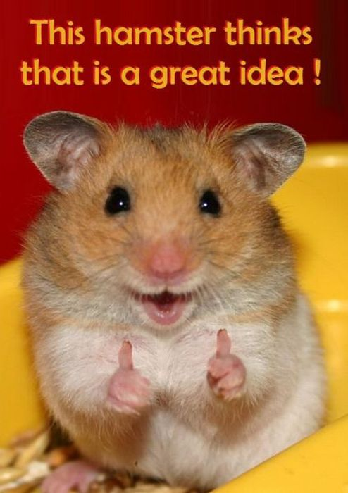 Great Idea Hamster