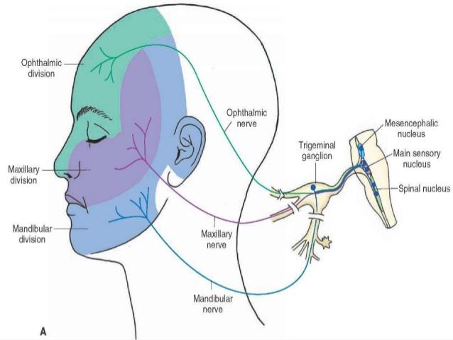 10. ETIOLOGY:  Usually idiopathic