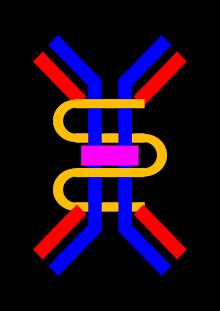 Inmunoglobulina A