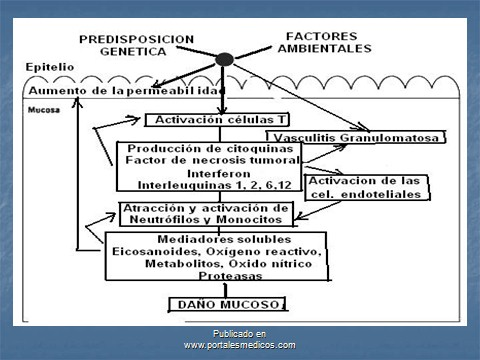 enfermedad_crohn_colitis_ulcerosa/EC_CU_patogenia_fisiopatologia