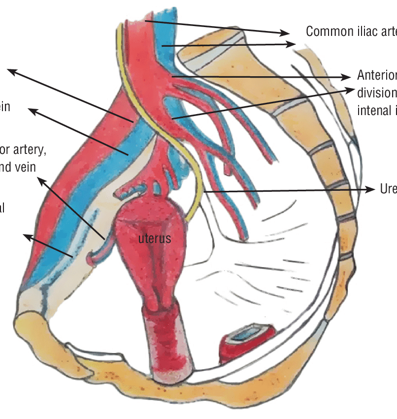 Anatomic details of the iliopectineal ligament.