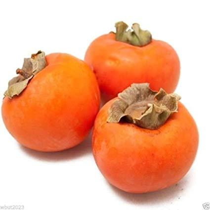 Traveller Location : Japanese Persimmon, (25 Seed ) Asian Persimmons(Diospyros kaki- Fuyu) Tree Shrub : Garden & Outdoor