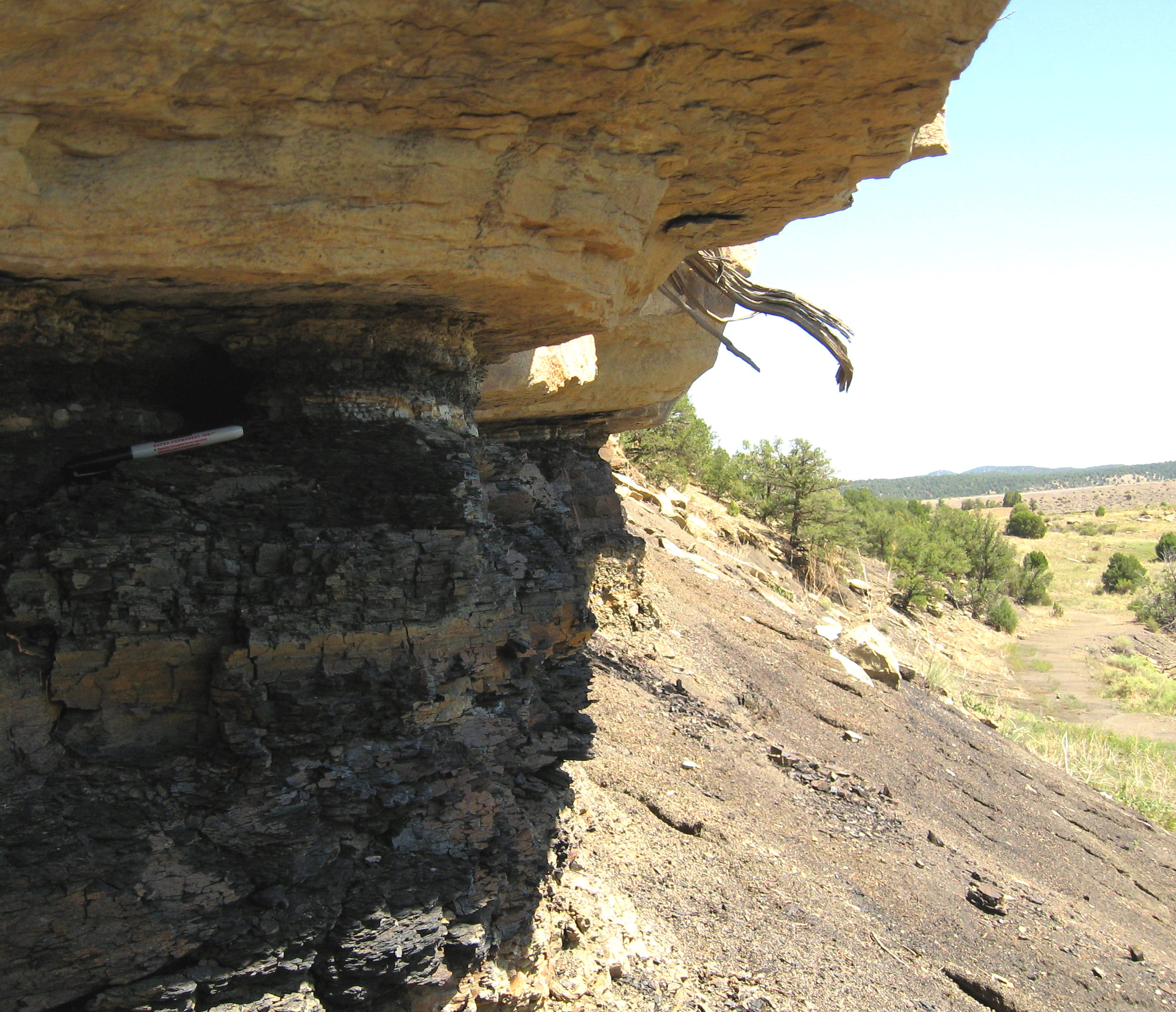 Side view of the K-T Boundary sitting under a cap of sandstone. Note  Sharpie marker just below layer.