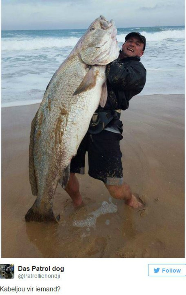 Nortje was fishing at Botha beach, close to Glentana on the Garden Route,  when he felt the bite of a 1,8 metre, 60.1 kilogram kabeljou tugging on his  line.
