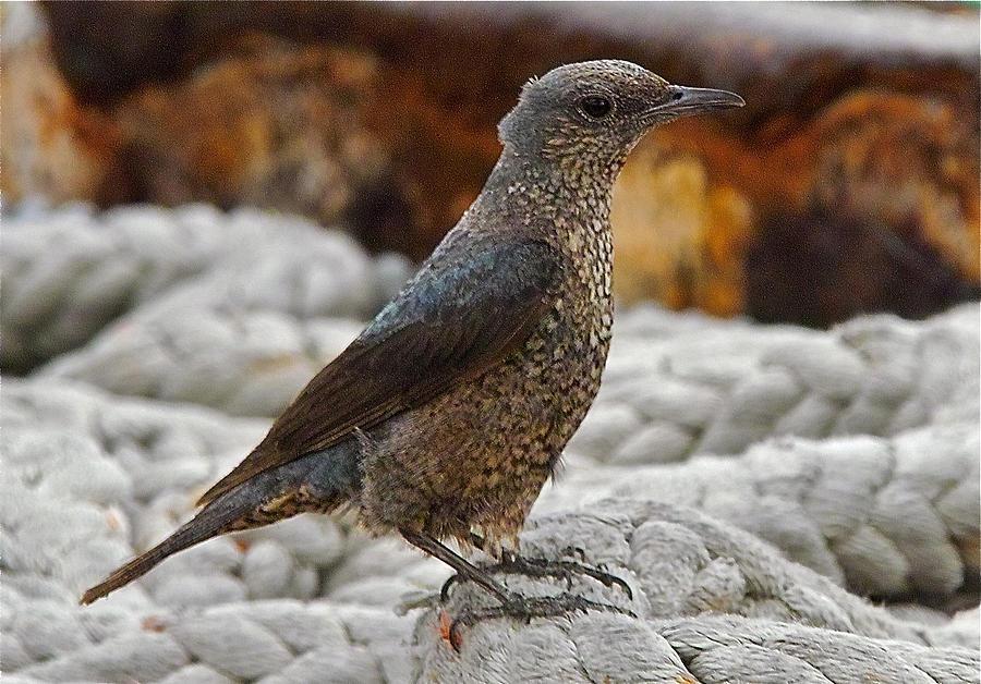 Bird Photograph - Bird On Deck by Jocelyn Kahawai