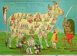 In a poster condemning the consumption of beef, the sacred cow Kamadhenu is  depicted as containing various deities within her body.