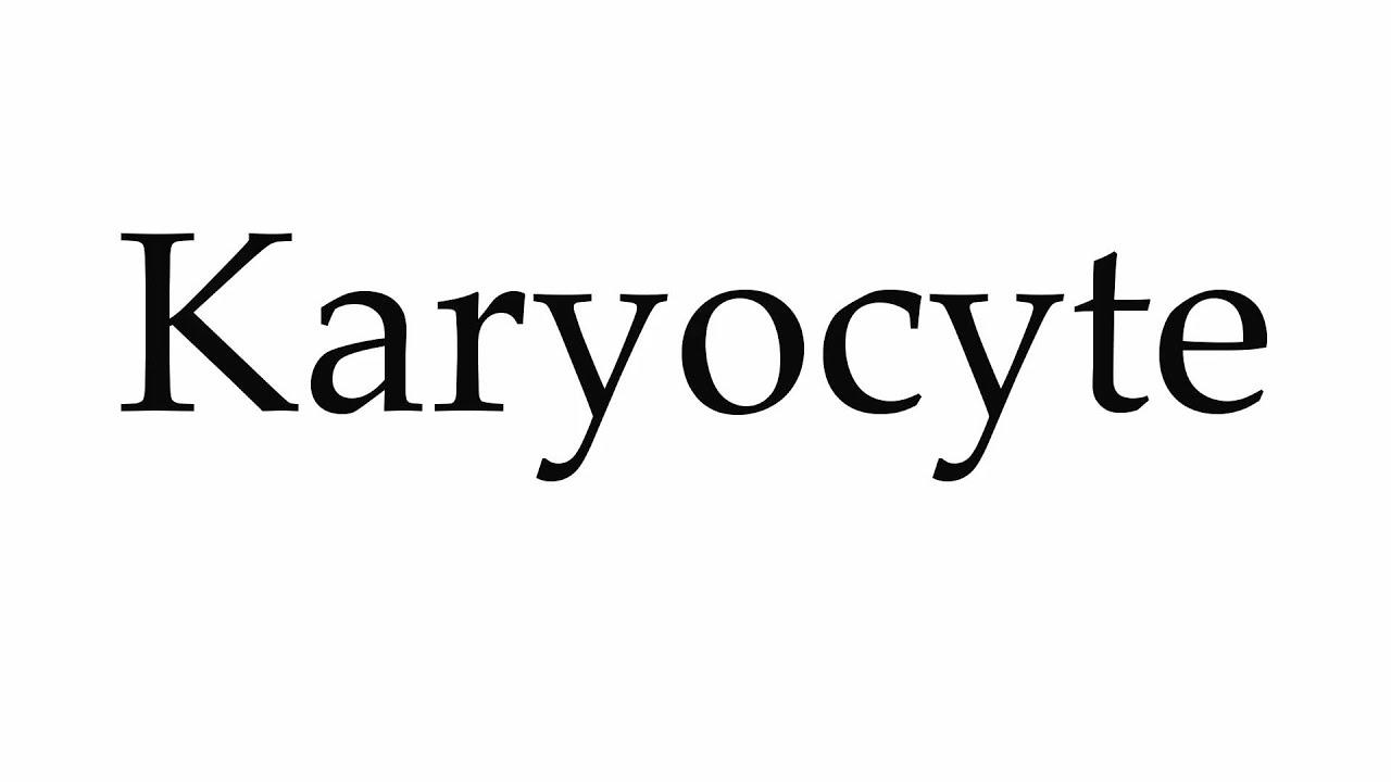 karyocyte