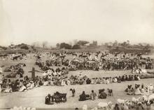 Livestock market in Katsina, 1911