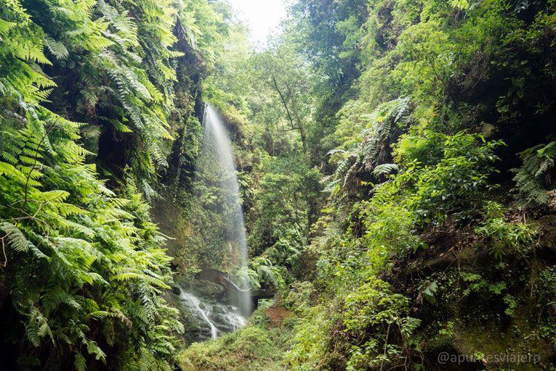 Cascada de Los Tilos - Cosas que hacer en La Palma (13)