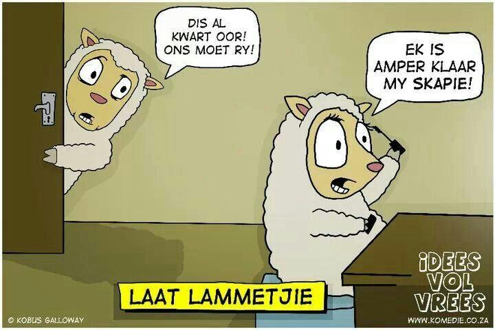 Laat lammetjie Afrikaans, Latte, Jokes, Summer, Husky Jokes, Memes, Latte