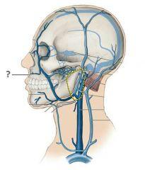 Superior Labial Vein