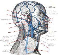 c. posterior auricular vein d. retromandibular vein e. sternocleidomastoid  muscle f. internal jugular vein g. facial vein h. superior labial vein