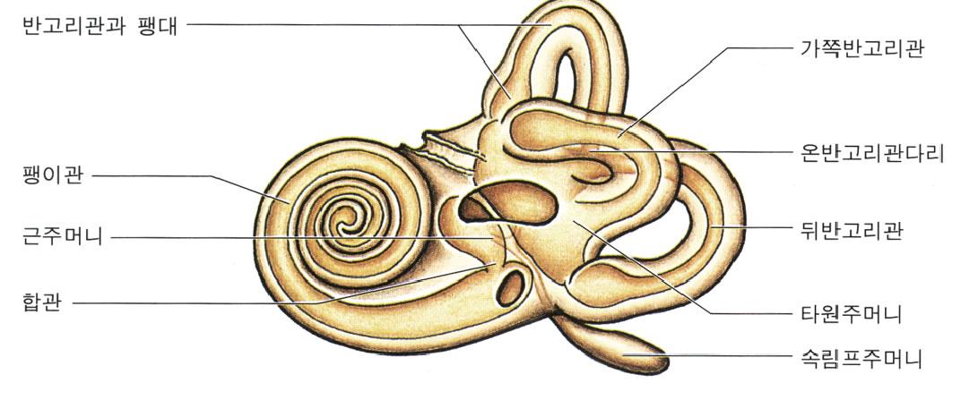 labyrinthine angiospasm