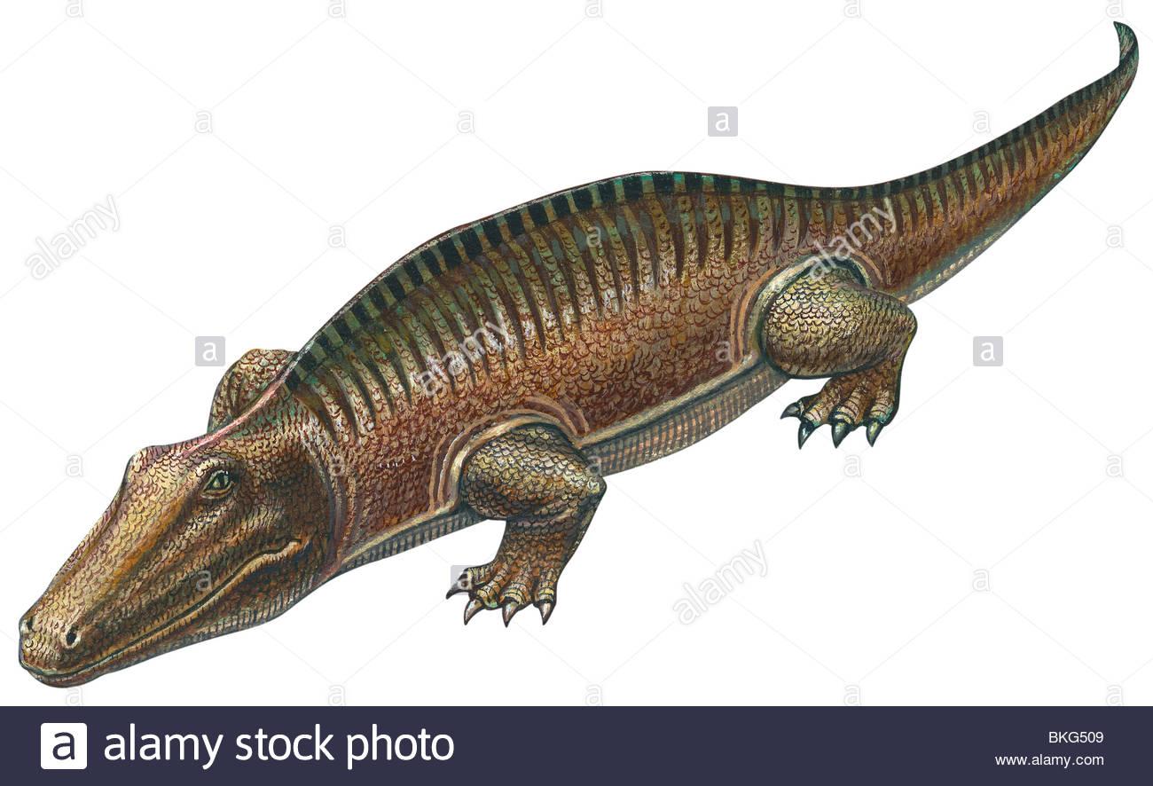 Labyrinthodont