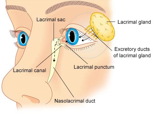 Lacrimal Apparatus : Anatomy, Structure, Parts, & Functions - DoctorAlerts
