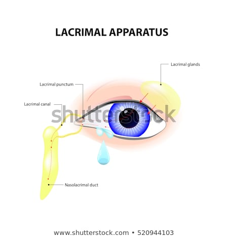 Anatomy of lacrimation. secretion of tears, which serves to clean and
