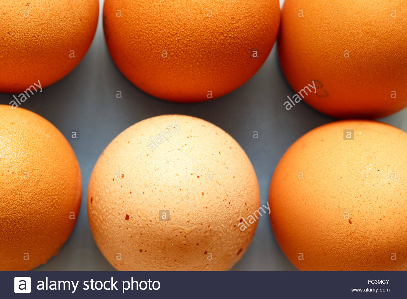 Fresh eggs - Stock Image