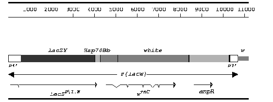 Molecular map