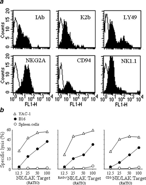NK/LAK cell recognition of B16F1 melanoma. NK/LAK cells were evaluated by  flow cytometry for their expression of membrane markers (filled profiles).