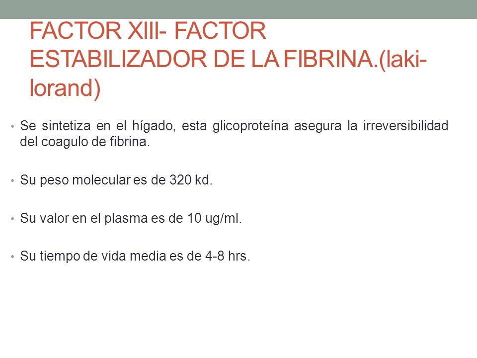 26 FACTOR