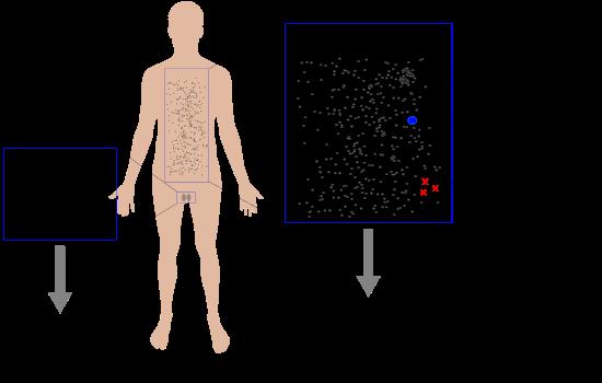 Neo-Lamarckian inheritance of hologenome
